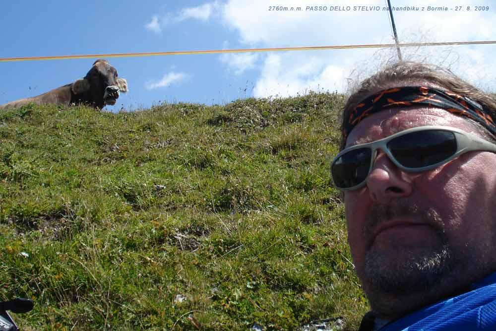Autoportrét - i ta kráva pod Stelviem je ze mne vyděšená. A nebo to jsou dva volové? :-)))